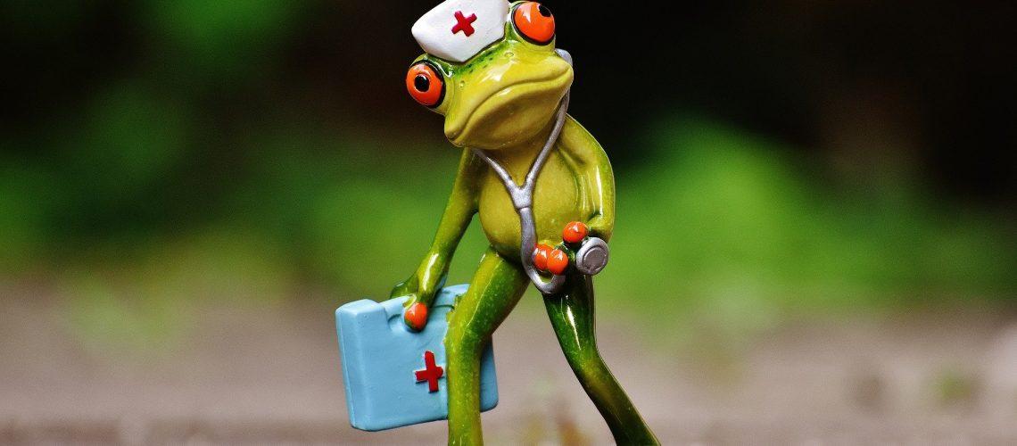 frog-1672942_1920